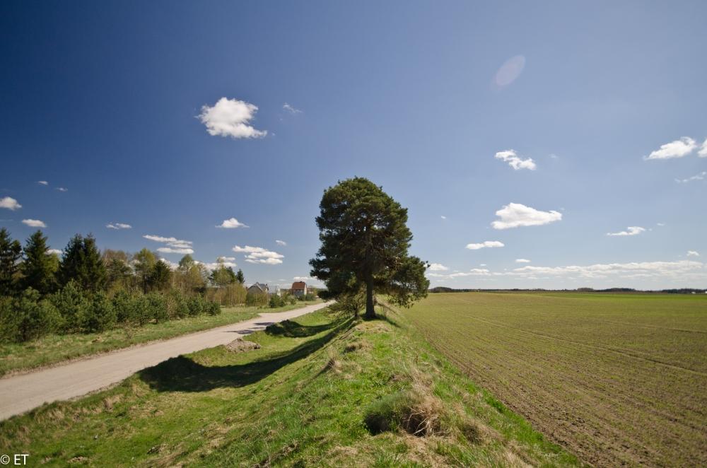 Droga z Gołubia